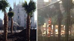 Bruciate in piazza Duomo 3 palme della