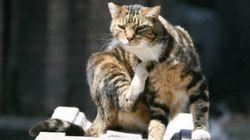 Scomparso 2 anni fa, gatto torna dalla sua padrona facendo 140