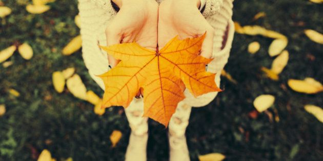 Autumn leaves in girl hands, instagram