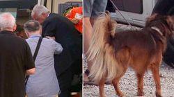 Veltroni morso da un cane alla Festa dell'Unità. L'ex leader dem scherza: