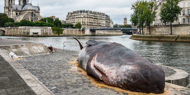 La morte di un capodoglio non ha nulla di romantico, nemmeno se capita a Parigi. Ma il suo cattivo odore...