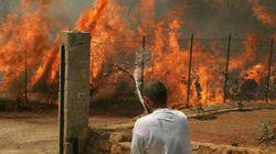 Palermo, la Polizia segue la pista dolosa all'origine degli incendi. Scoppia la polemica sui
