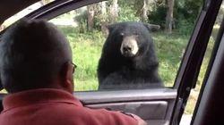 Il simpatico scherzetto dell'orso di Yellowstone a una famiglia in visita nel