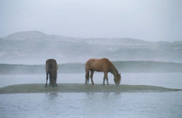 SABLE ISLAND IN NOVA SCOTIA (CANADA) (Photo by Pierre Perrin/Sygma via Getty