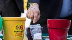 Stop alla legalizzazione della cannabis, alla Camera passa solo l'uso