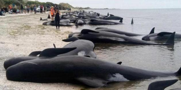Pd, un partito di balene