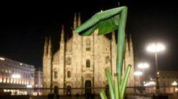 In piazza Duomo a Milano spuntano i banani. È polemica: