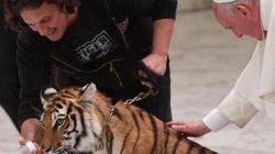 La tigre di Papa Francesco e l'enciclica anche nei