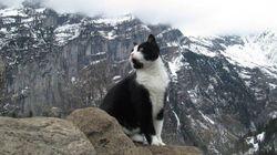 Il gatto eroe che ha salvato un escursionista smarrito e ferito sulle Alpi