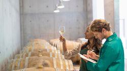 A.A.A. Cercasi assaggiatore di vini in Italia. Un lavoro da sogno (con contratto