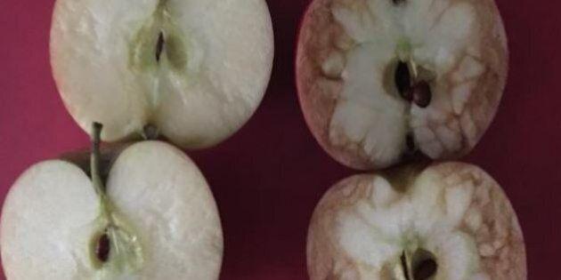 Un insegnante spiega il bullismo con due mele rosse. E la reazione dei bambini è