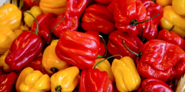 Brightly colored red and yellow habanero