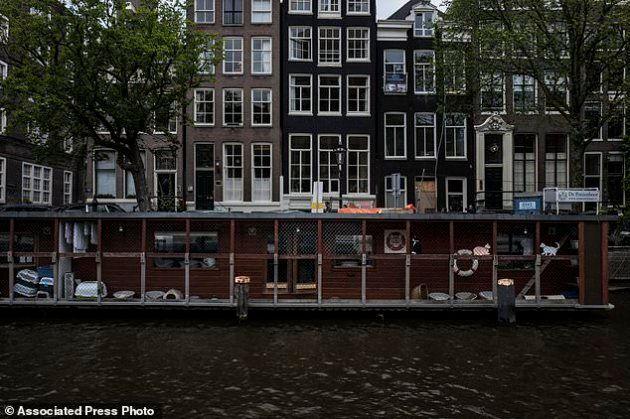 I gatti randagi abitano una barca vela su un canale di Amsterdam. E la