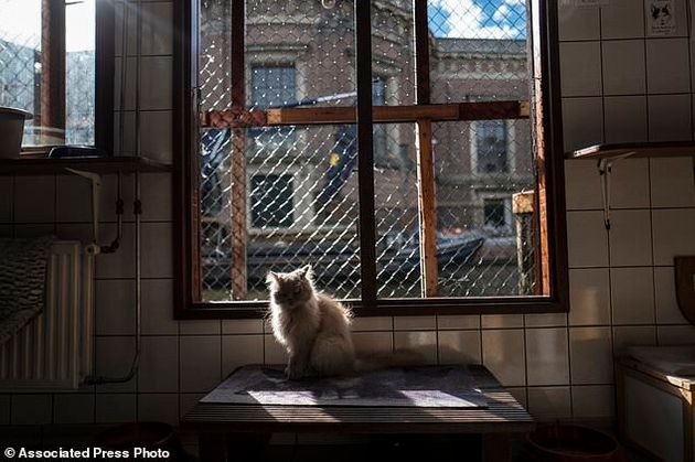 In this Wednesday, Aug. 2, 2017 photo, Kasumi, a 9-year-old cat sits in a spot of light at the Catboat...