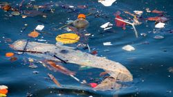 Ci sono 38 spiagge che bisogna assolutamente evitare per la presenza di batteri oltre i limiti di