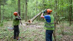 Madri ambientaliste allattano i figli nella foresta per fermare la legge