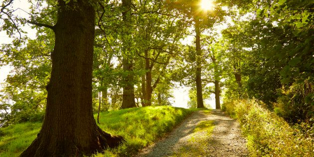 Sunny tranquil footpath through green forest, Lake District,