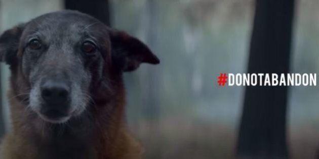 Il video denuncia degli animalisti: