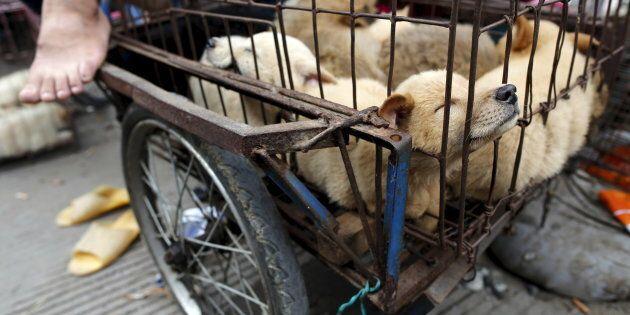 Taiwan primo stato asiatico a vietare la macellazione di cani e