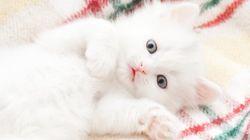 Accarezzare, coccolare e baciare i gatti è rischioso (soprattutto i