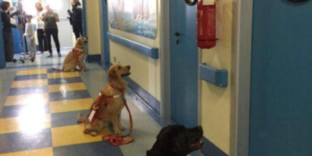 Quanta bellezza in questi cani: seduti in attesa che i piccoli pazienti dell'ospedale aprano loro le