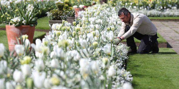 Il giardino di Lady Diana apre a Kensington Palace per i 20 anni dalla sua