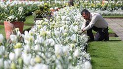 La Royal Family commemora Diana con un giardino dedicato a
