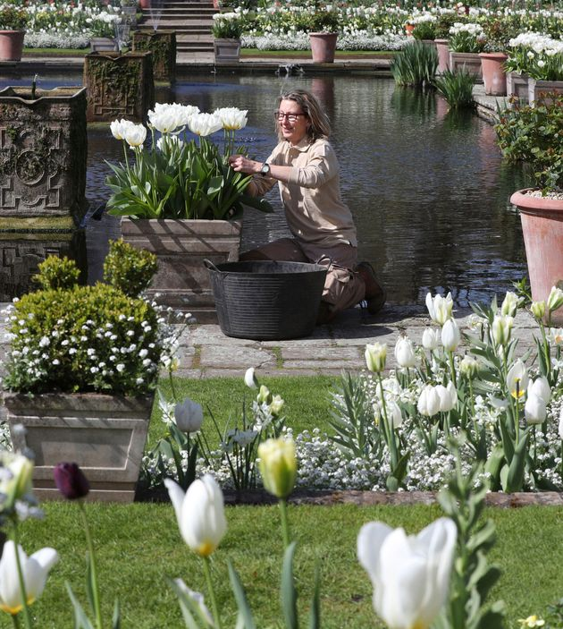 Historic Royal Palaces gardener attends to blossoms in The White Garden at Kensington Palace in London,...