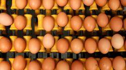 Fipronil nelle uova anche in