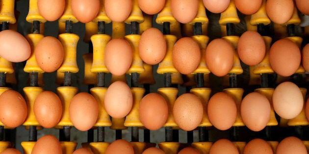Fipronil nelle uova anche in Italia: su 114 campioni, 2 sono risultati