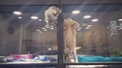 Il video del gatto che scappa nella cuccia del cane non è così tenero come