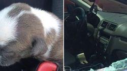 La soluzione perfetta della polizia della Florida per chi lascia il cane in auto