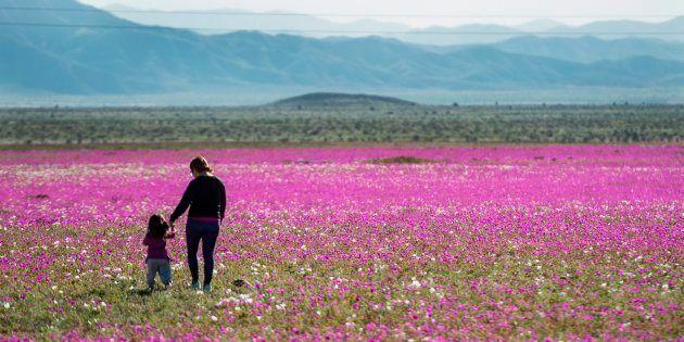 Pioggia e perfino neve nel deserto più arido della Terra. E la natura esplode con colori