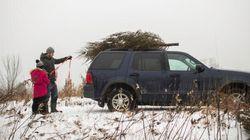 Come trasportare un albero di Natale senza rischiare