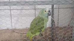 Μαφιόζος παπαγάλος «συνελήφθη» για ναρκωτικά αλλά κρατάει το ράμφος του