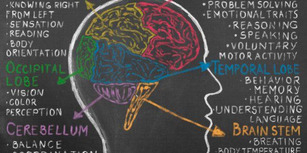 Human Brain Lobes on Blackboard. Frontal lobe, occipital lobe, parietal lobe, and temporal lobe. Human...