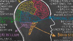 Se commettiamo un errore dopo l'altro è perché il cervello