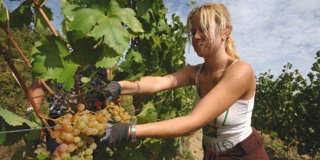 L'Italia e la sfida dell'agricoltura