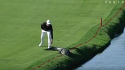 La nonchalance con cui questo golfista caccia via l'alligatore dal campo è