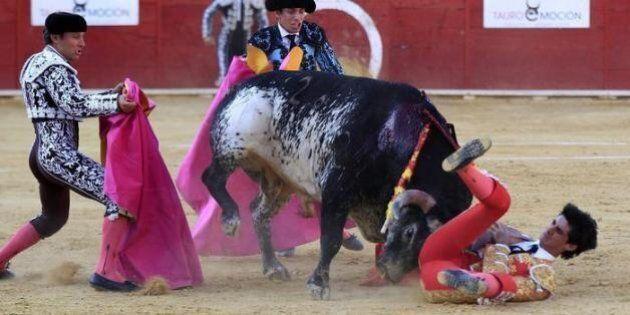 Spagna, torero Victor Barrio muore incornato dal toro in diretta tv. Non succedeva da 24