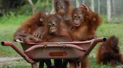 In Indonesia è tempo di scuola anche per gli