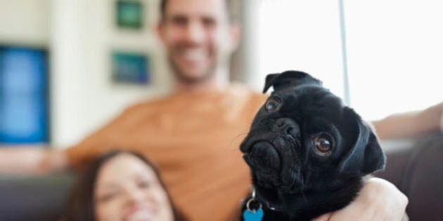 5 motivi per cui ci vuole un cane nella nostra