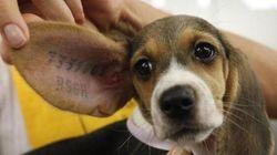 Sperimentazione e diritti animali: possiamo fare a meno della