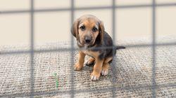 Mercato nero dei cuccioli: ogni settimana in Italia ne muoiono
