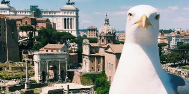 Doveva essere un semplice buongiorno del Comune di Roma ma il protagonista della foto è diventato un