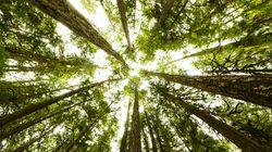 In USA gli alberi stanno iniziando a spostarsi verso ovest (e nessuno sa