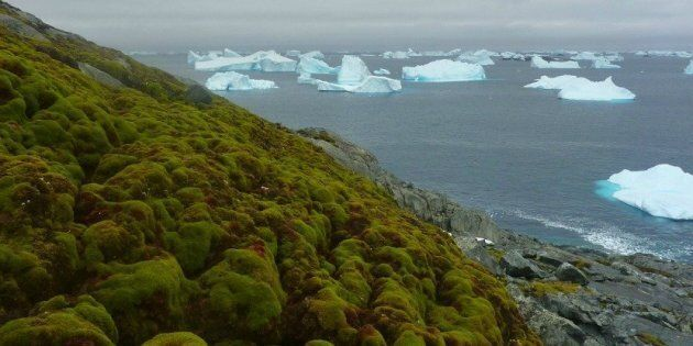 Perché l'Antartide sta diventando