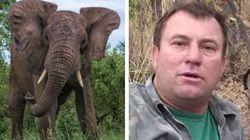 Cacciava un elefante, bracconiere muore schiacciato dall'animale colpito a