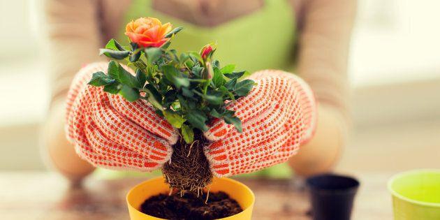 Un fiore per riscattare la condizione