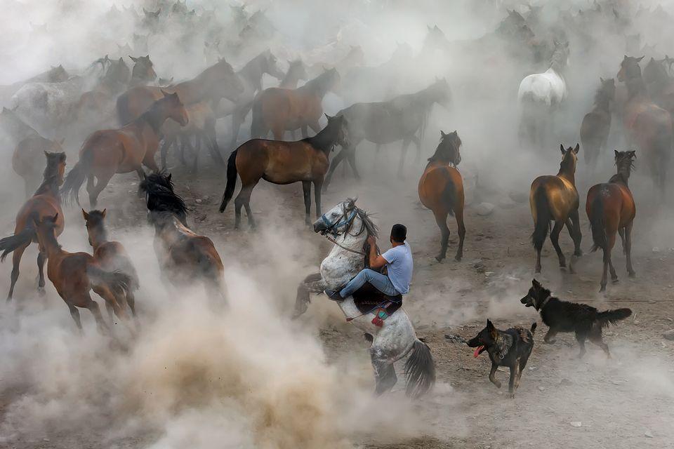 Addestratori di cavalli a Hörmetçi ,Kayseri,
